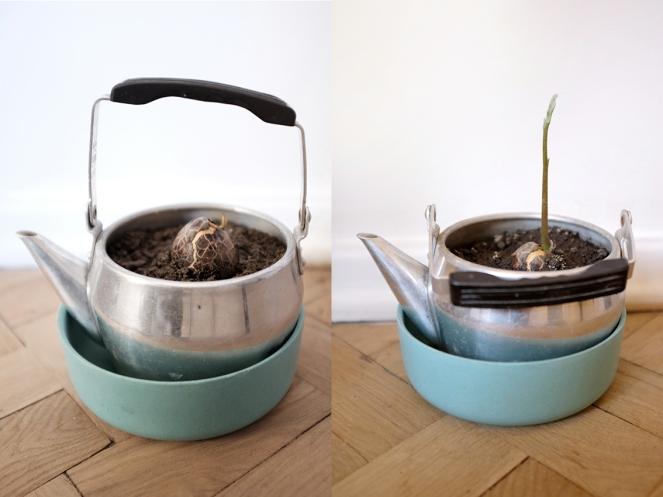 Grow and Avocado Seed Gift