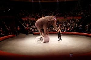 Tbilisi Circus Elephant