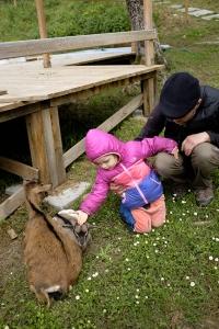 Petting baby goat Alpaca House Montecastello in Italy