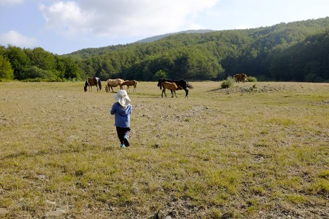 Watching a wild horse nursing a foal!