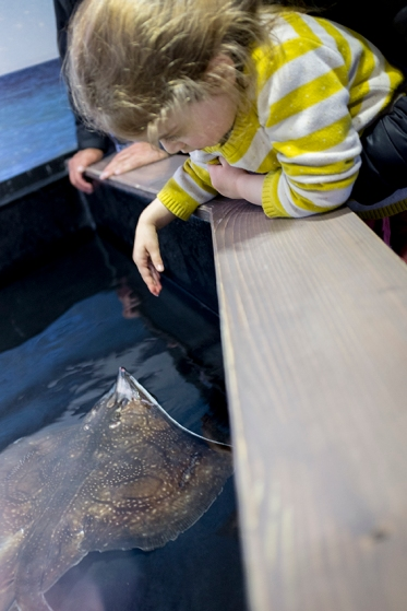 Touching Sting Rays at the Aquarium in Montpellier, France